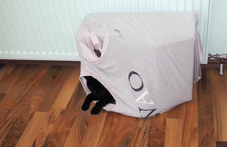 Katze in Karton mit T-Shirt