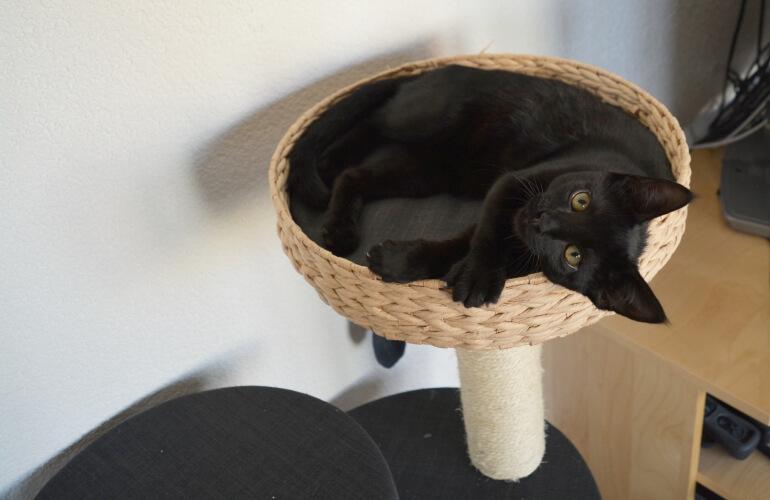 Was kostet eine Katze?