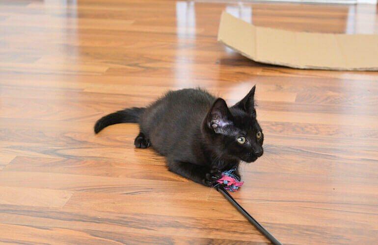 Katze mit Spielzeug