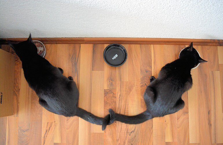 Katzen beim Fressen