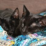 Eine Katze zieht ein: Checkliste und Tipps