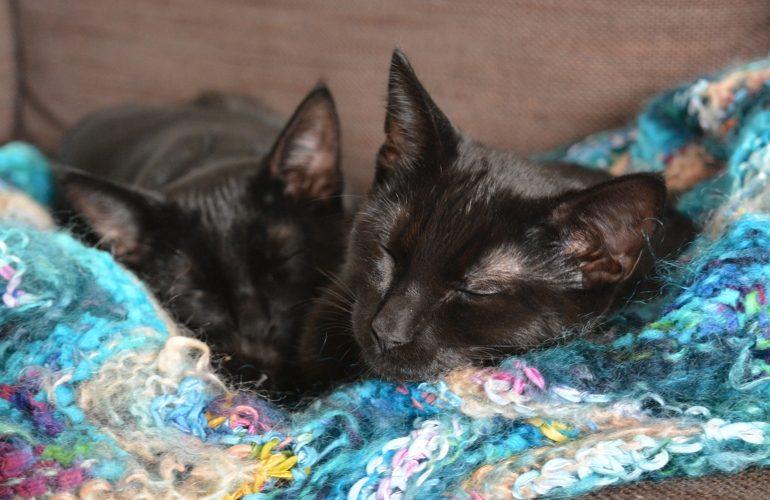 Zwei Katzen schlafen