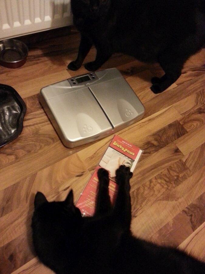 Katze, PetPod, StickyPaws