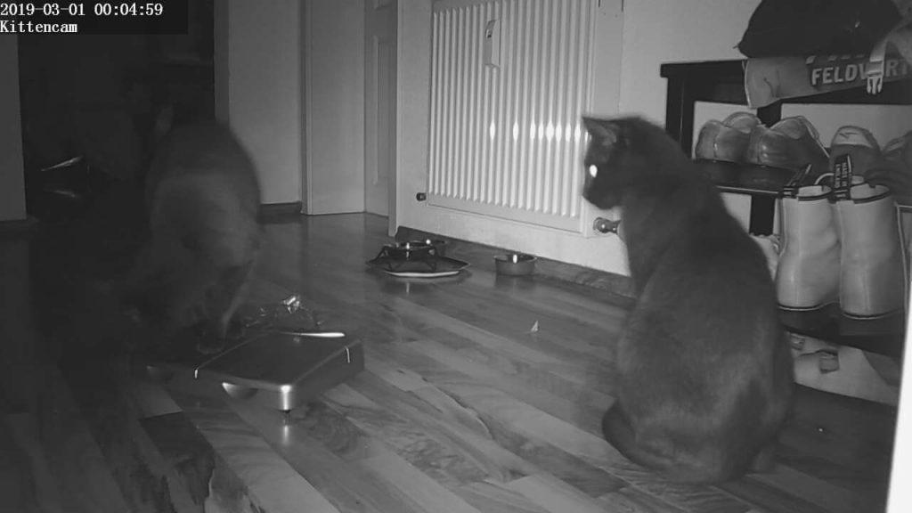 PetPod im Katzenangriff