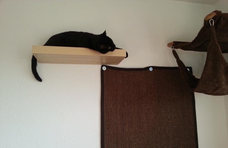 Katze auf Regal