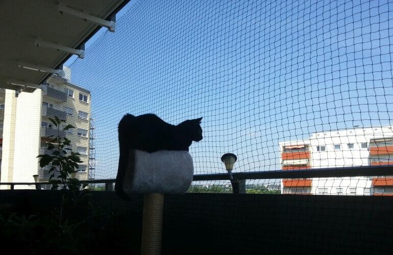 Katze auf abgesichertem Balkon