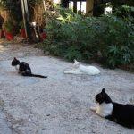 Katze kaufen oder adoptieren – Pro und Kontra