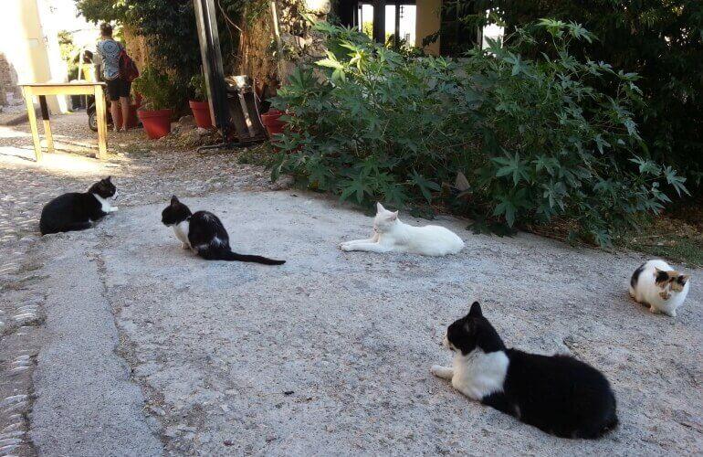 Freilaufende Katzen