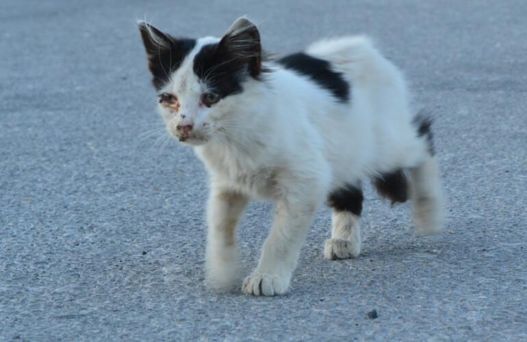 Katzenbaby mit verdreckten Augen