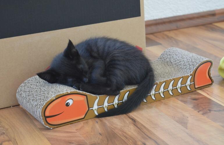Katzenbaby auf Kratzbrett