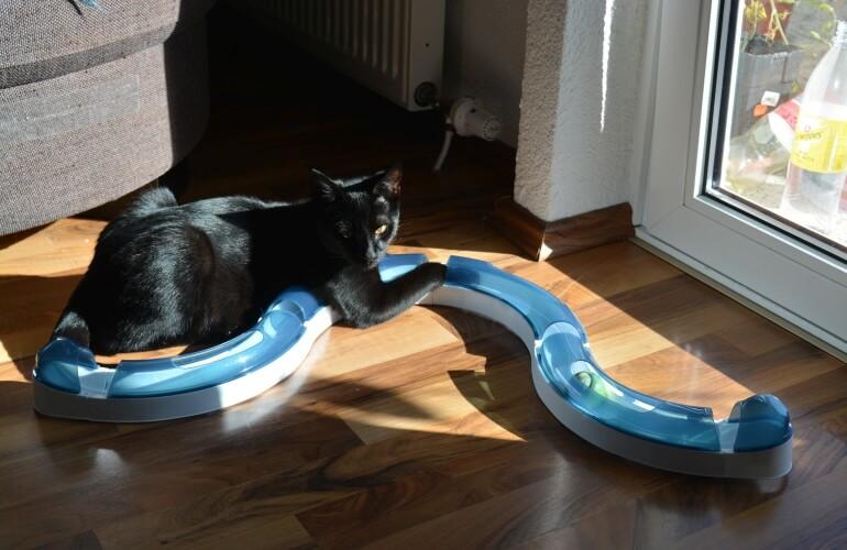 Katze Spielschiene