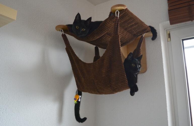 DIY: Katzen-Kletterwand mit Ikea-Regalen