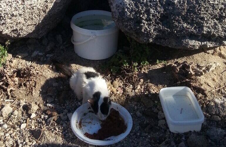 Katze in Rhodos isst vom Teller