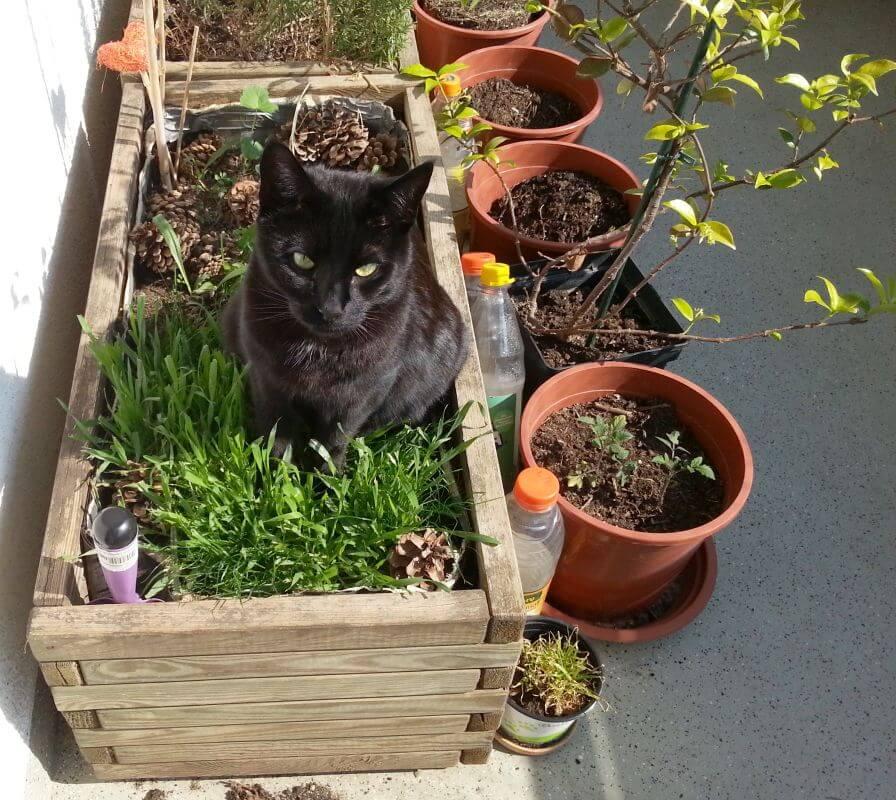 Garrus im Katzengras