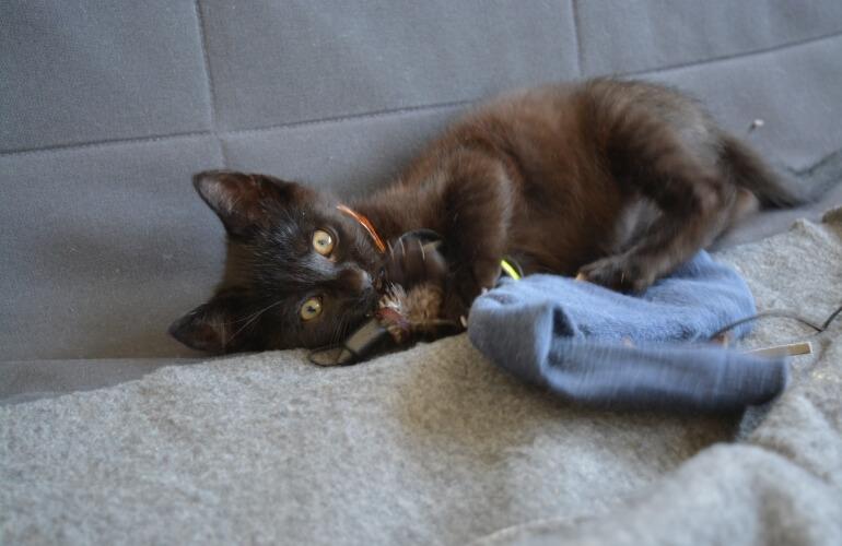 Katzenbaby mit Spielzeug