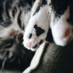 11 Dinge, die nur Katzenhalter wissen
