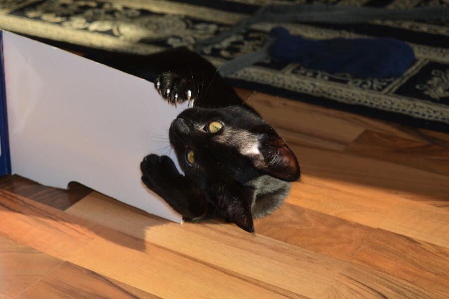 Katze mit Karton