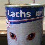 Katzenfutter-Test: Bozita mit Lachs