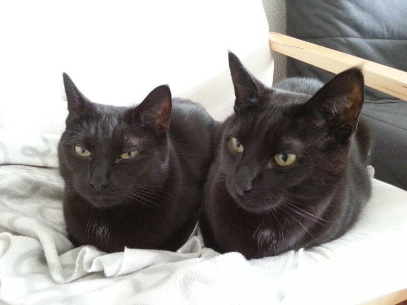 Wrex und Garrus - unsere Wohnungskater