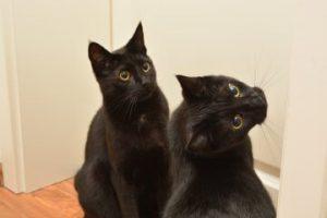 Erfahrungsbericht: Mein Kater miaut(e) ständig vor der Schlafzimmertür