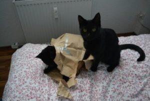 Geschenkideen für Katzenfreunde