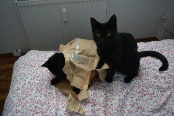 Geschenkideen.für.Katzen