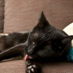 Katze leckt und beißt beim Streicheln