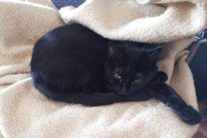 Tierarztkosten bei Katzen: Was zahlt man für Kastration, Impfung und Untersuchung?