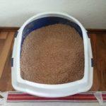 Katze pinkelt in die Wohnung – Was tun?