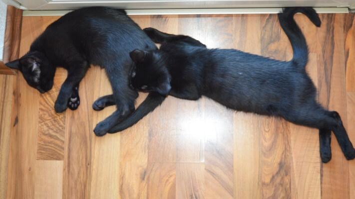 Zwei Kater ausgestreckt auf dem Boden.