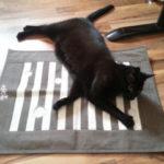 5 Spielzeuge für Katzen, die man haben sollte