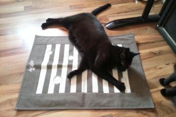 Katze mit Aktivitätsspielzeug