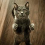 Katzen barfen: Eine Barf-Anleitung für Anfänger