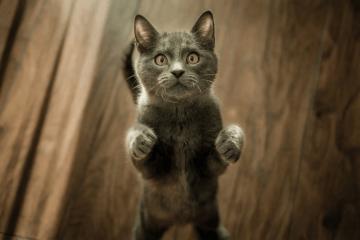 Katzenfoto von Marko Blazevic