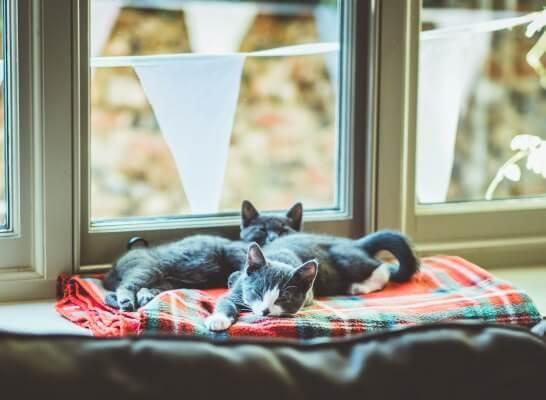 Zwei Katzenbabys auf Decke am Fensterbrett