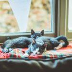 Katzen auf Schlafplatz am Fenster