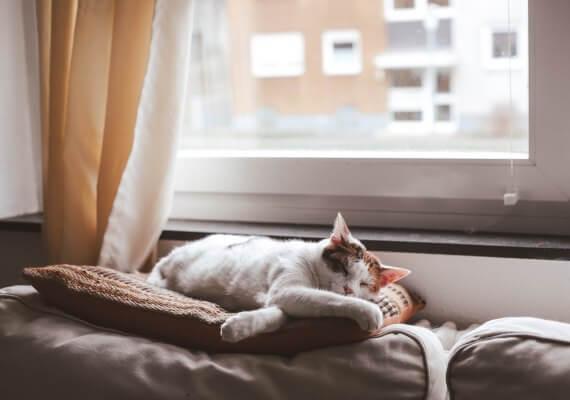 Katze auf Kissen bei Fenster