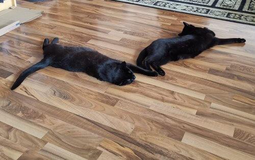 Katzen liegen auf Boden