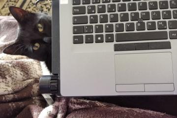 Katze unter Laptop