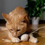 Katze mit DIY Spielzeug